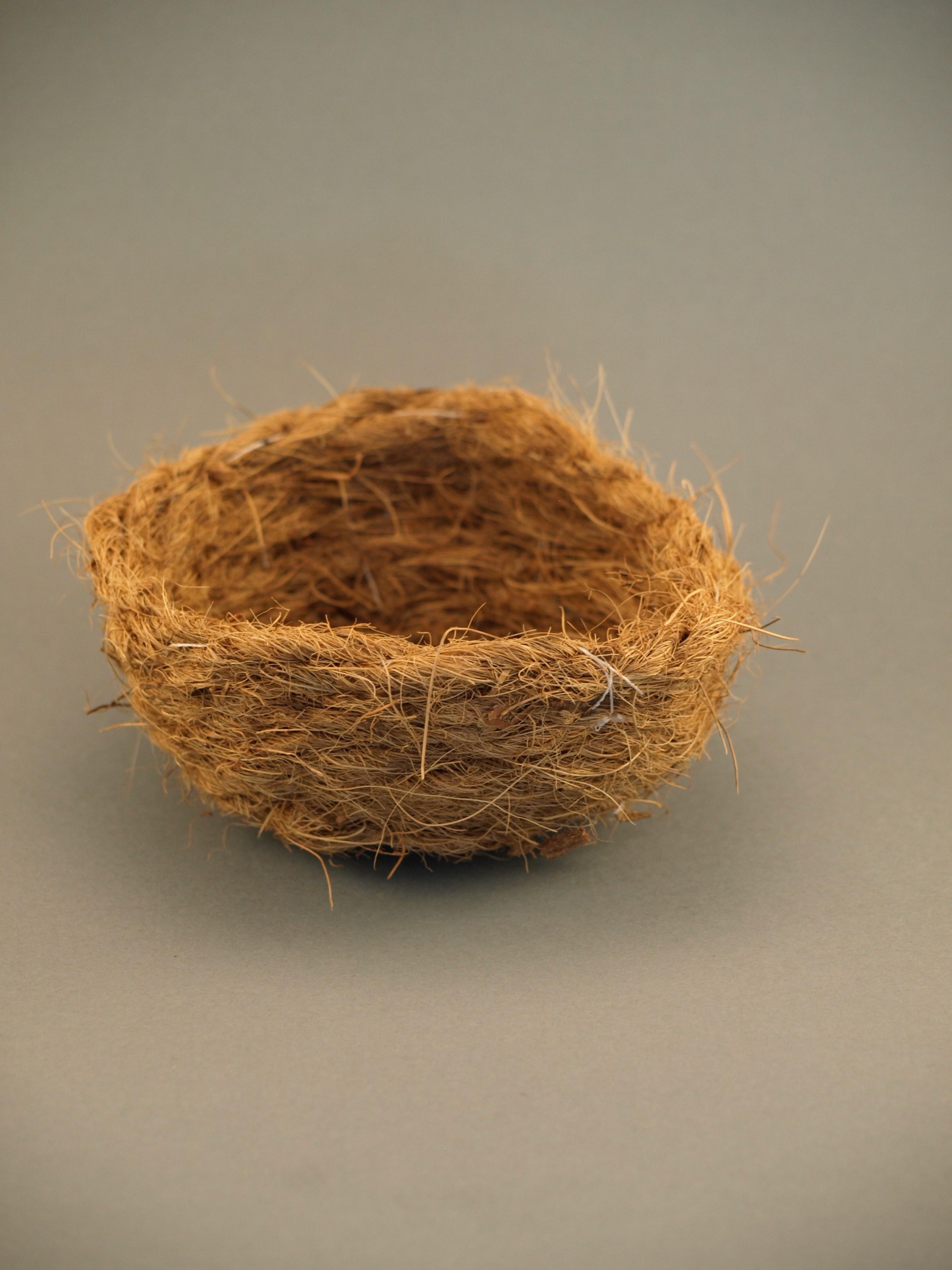 Cocos inlegnest groot