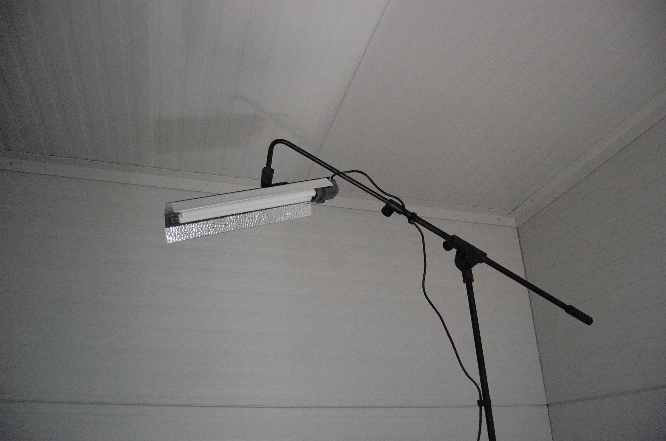 Flood light pro standaard papegaai