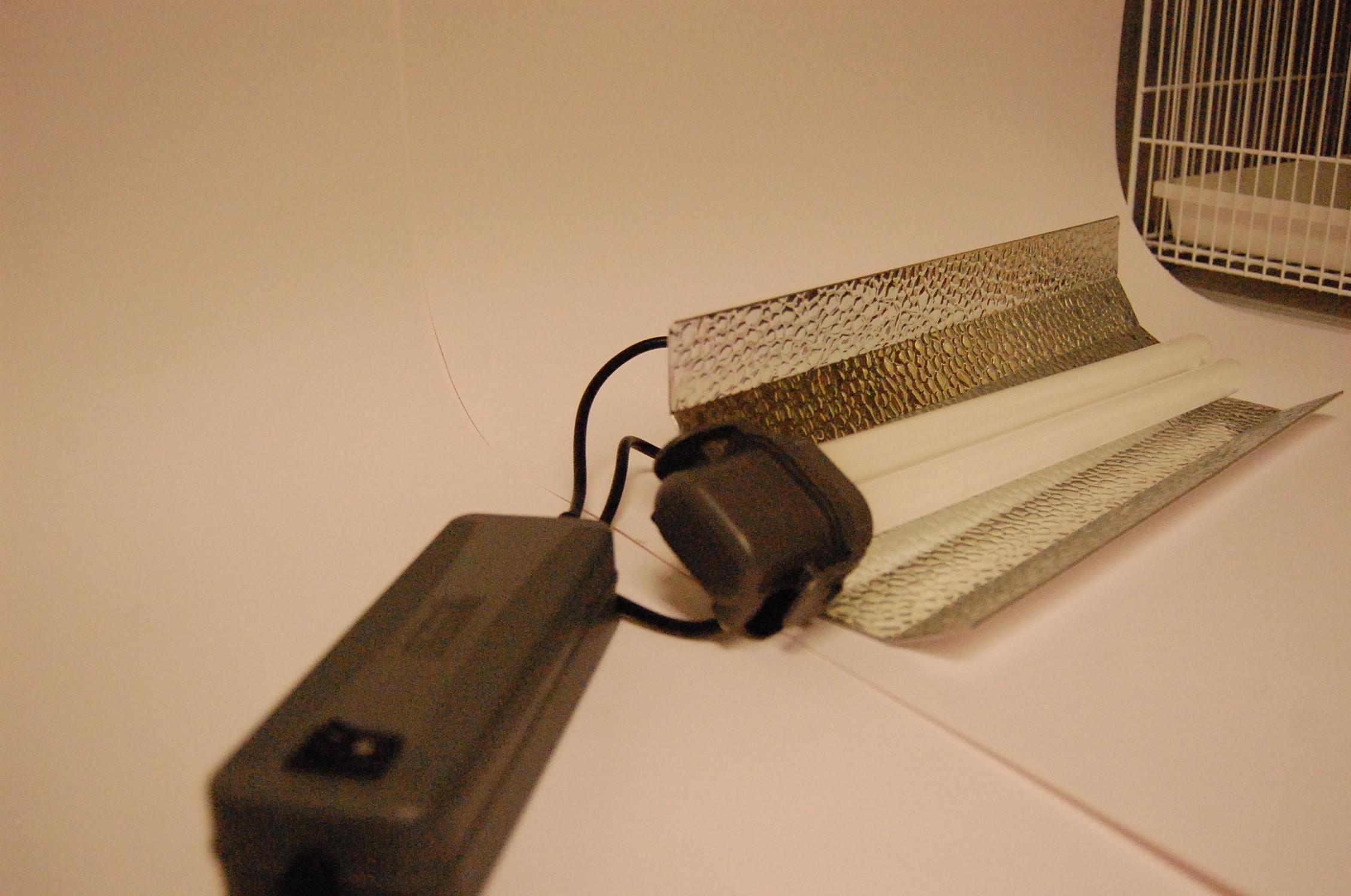 Papegaaien UV lamp