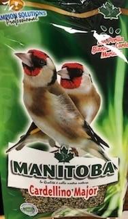 Cardellino Major Manitoba (26007)