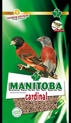 Cardinal Manitoba (Amerikaanse sijzen) (26008)