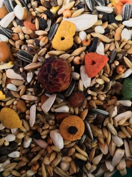 Papegaai met pellets OBIE 8