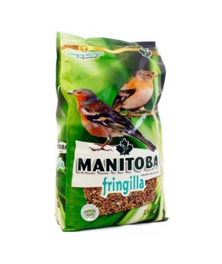 Fringilla Manitoba (goudvink)
