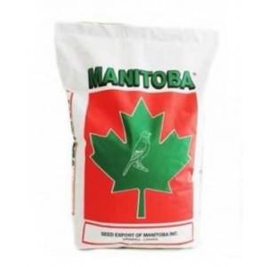 **NIEUW** Canary T3 Platinum  Manitoba
