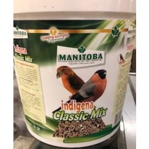 Indigena Manitoba (goudvink)