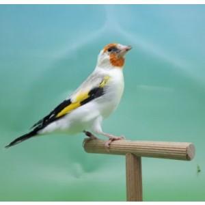 Betere Vogels te koop bij Birdshop Eindhoven HQ-48